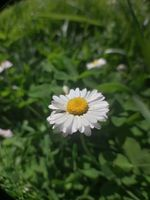A MACRO-daisy - Una MACRO-margherita - Macro Fisheye