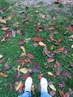 Standing on a bed of leaves - In piedi su un letto di foglie