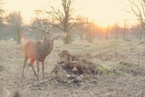Animal_deer_wildlife_tree_light-8999!s