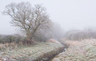 Foggy Winter Scene