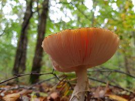 Mushroom in Light