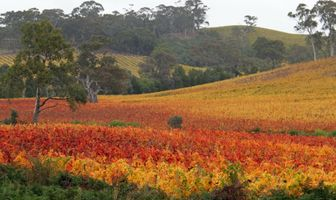 Autumn-vineyards-1338299-1918x1142