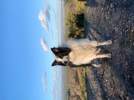 Border Collie, Skye with a beautiful view. Winters dog walk.
