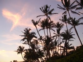 Palm Shades