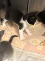 Kitten Playtime