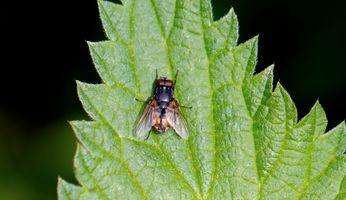 Random fly