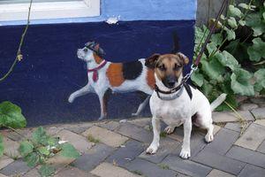 My Dog Piefke