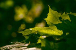 Light on the Leaf