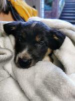 Collie dog enjoying life