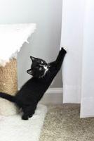 Kitten climbing the curtains