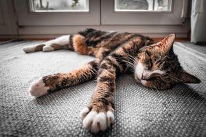 Cat sleeping in on the carpet