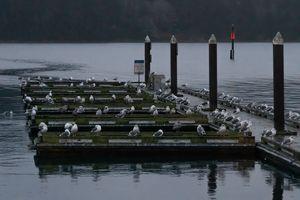 Seagulls on Boat Docks