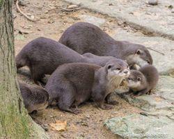 Otter Family Group