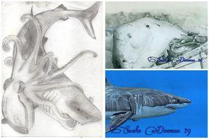 Great white shark - comparison