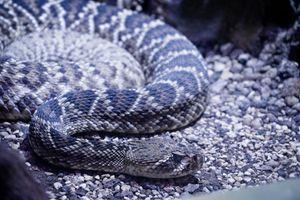 Snake - Safari Park