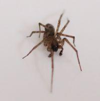 A spider sat down beside her...