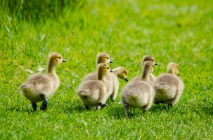 New Borns out for a Stroll