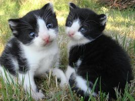 Two black and white kittens green grass sitting beside each other