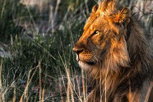 Capturing-wildlife-tips