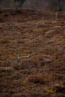Heather field at North Sea