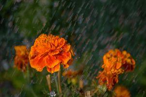 Flower Under Heavy Rain