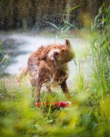 Instant rainmaker