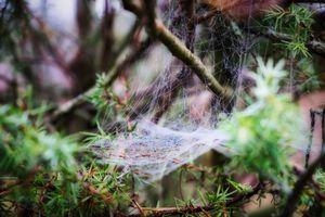 Misty woodland 7