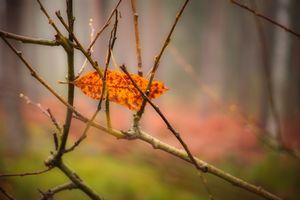 Misty woodland 8