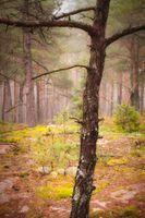 Misty woodland 12