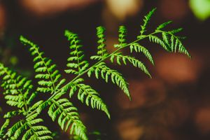 Green fern in the woods