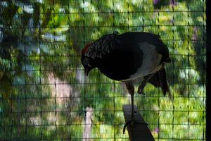 Birds-00554