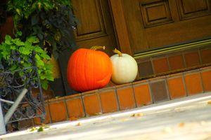 Two Pumpkins October 2,2020  Ogden utah