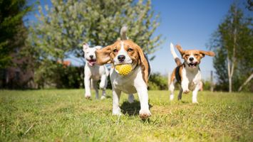 Dogs-playing-outside