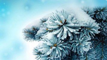 Ein-scho?nes-winterbild-mit-einem-tannenbaum-und-schnee-und-schneeflocken-scho?ne-winterbilder