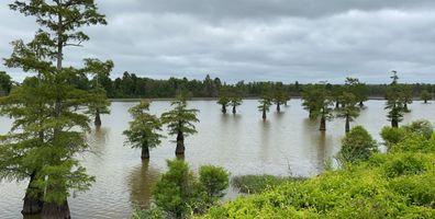 Cypress trees - wildlife refuge