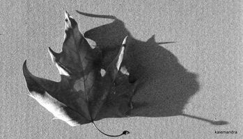 Leaf and its shadow