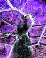 Electric purple tree