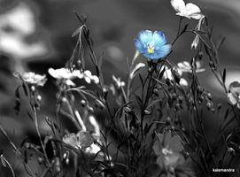 Blue as flax