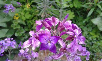 A purple beauty