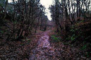 Abandoned Railway Trackbed.