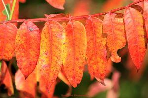 Orange and Yellow Autumn Leaves