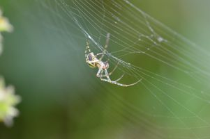 Macro shot of a Spider on its web