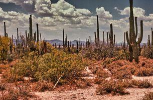 Saguaro National Monument, Arizona (1983-05-28 0015_01)