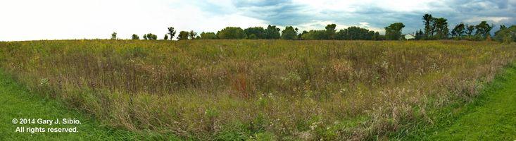 Panorama: Rollins Savanna Wetlands (2014-09-20 13-33-43 to 13-33-55a)