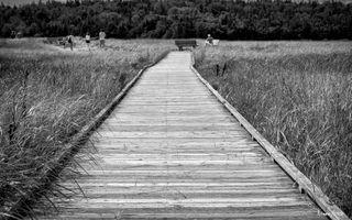 McCormack's Beach Provincial Park in Black & White