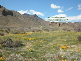 Franklin Mountains with Poppies