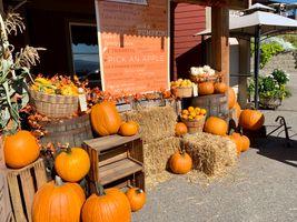 Autumn at Davison Orchard in Vernon BC