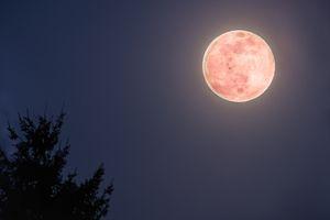 Super Moon - Pink - April 2020