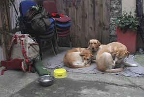 3 dogs huddled in a courtyard