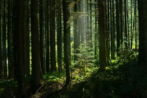 'The Chosen One', Taff Forest, Brecon Beacons National Park, Wales